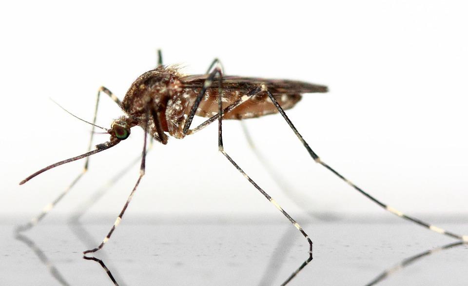 Die Mücke im Schlafzimmer – Kritik am öffentlich-rechtlichen Rundfunk aus der Zivilgesellschaft